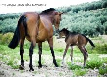 Yeguada Juan Diaz Navarro - Fotografias (16).jpg