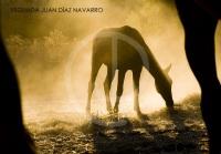 Yeguada Juan Diaz Navarro - Fotografias (17).jpg