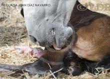 Yeguada Juan Diaz Navarro - Fotografias (25).jpg