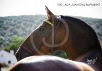 Yeguada Juan Diaz Navarro - Fotografias (29).jpg