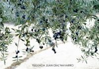 Yeguada Juan Diaz Navarro - Fotografias (35).jpg