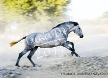 Yeguada Juan Diaz Navarro - Fotografias (40).jpg