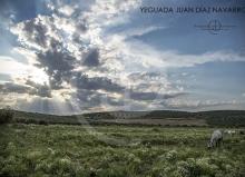 Yeguada Juan Diaz Navarro - Fotografias (2).jpg