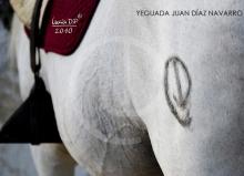Yeguada Juan Diaz Navarro - Fotografias (23).jpg