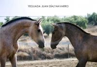 Yeguada Juan Diaz Navarro - Fotografias (28).jpg