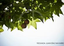 Yeguada Juan Diaz Navarro - Fotografias (33).jpg