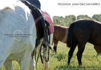 Yeguada Juan Diaz Navarro - Fotografias (34).jpg