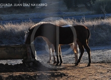Yeguada Juan Diaz Navarro - Fotografias (41).jpg