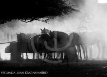 Yeguada Juan Diaz Navarro - Fotografias (5).jpg
