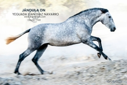 Jandula DN 13-08-2011